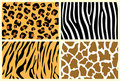 Animal skins Stock Photos
