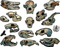 Animal skulls Royalty Free Stock Photography