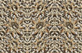 Animal skulls background digital composite of my photographs of the of various mammals Royalty Free Stock Photography