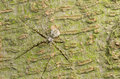Animal spider on tree Royalty Free Stock Photo