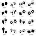 Animal Spoor Footprints Icon V...