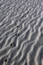 Animal spore in desert sand - Namibia Stock Photography