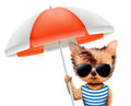 Animal in t-shirt and sunglasses holding umbrella