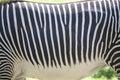 ANIMAL Texture Background - Ze...