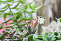 Animal Toy In Seasonal Plant
