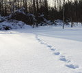 Animal tracks snow leading forest Royalty Free Stock Photos