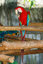 Animal,Wildlife,Macaw Parrot,Macaw, Parrot. Royalty Free Stock Photo