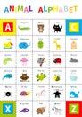 Animal zoo alphabet poster. Cute cartoon character set. Isolated. White background Flat design. Baby children education. Alligator Royalty Free Stock Photo