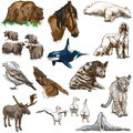 Animals around the world set no hand drawn illustrations collection of an description full sized drawing Royalty Free Stock Image