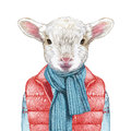Animals as a human. Lamb in down vest, sweater and scarf.