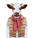 Animals as a human. Portrait of Cow in down vest and sweater.
