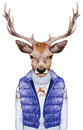 Animals as a human. Portrait of Deer in down vest and sweater.