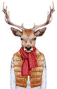 Animals as a human. Portrait of Deer in down vest, sweater and scarf.