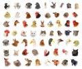 Tiere vögel