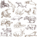 Animals collections of hand drawn illustrations isolated on white around the world Royalty Free Stock Image