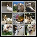 Animals farm collage Stock Photos