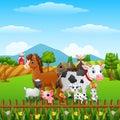 Animals farm happy in the hills
