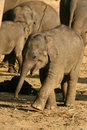 Animals: happy little baby elephant Stock Photo