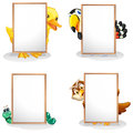 Animals hiding at the back of the whiteboards illustration on a white background Royalty Free Stock Images