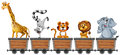 Animals in mining carts