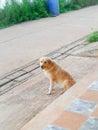 Animals my dog dog lovely dog cute dog Stock Image