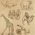 Animals pack around the world set no collection of an hand drawn illustrations description each drawing comprise of two layer of Royalty Free Stock Photos