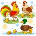 Animals part 16