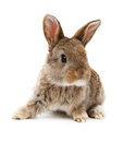 Animals rabbit isolated on a white background Royalty Free Stock Photo