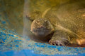 Animals reptiles pets reptile animal turtle isolated beauty Royalty Free Stock Photos
