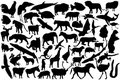 Animals silhouettes Royalty Free Stock Image