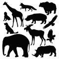 Animals silhouettes of different on white background Stock Image