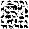 Animals vector Royalty Free Stock Photos