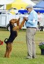 Para mostrar perro con su en mostrar anillo