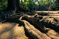 Ankor the lost city ta prohm of relic in autumn days Royalty Free Stock Photo