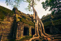 Ankor the lost city ta prohm of relic in autumn days Royalty Free Stock Image