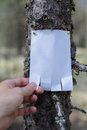 An announcement, a letter, a message on a tree in the forest. Royalty Free Stock Photo