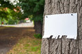 Announcement on tree blank sheet of paper notice at the bark of Royalty Free Stock Image