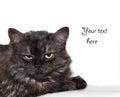 Annoyed cat Royalty Free Stock Photo