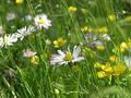 Another meadow Royalty Free Stock Photo