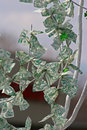 Another money tree Royalty Free Stock Photos