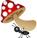Ant carrying mushroom Royalty Free Stock Photo