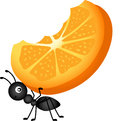 Ant carrying orange slices Image stock