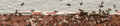 Ant colony migration Royalty Free Stock Photo