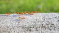 Ant forage for food motion of Royalty Free Stock Images
