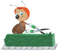 Ant gardener corta o arbusto o jardineiro com tesouras corta as folhas Fotos de Stock
