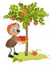 Ant gardener hopsamlingäpplen apple träd och röda mogna äpplen fruktträdgård Arkivfoton