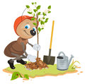 Ant Gardener planting tree. Seedling fruit tree. Apple tree sapling Royalty Free Stock Photo