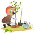 Ant Gardener planting tree. Seedling fruit tree. Apple tree sapling