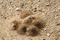Ant hills appear as mounds on the ground near s nest above soil western cape south africa Royalty Free Stock Photo