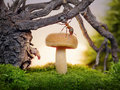 Ant, mushroom and stump, sunrise in forest Royalty Free Stock Photo